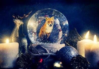 A fox Photoshopped into a Snowglobe